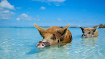 Full Day Small Group Tour to Pig Beach by Power Boat , Nassau, Jet Boats & Speed Boats