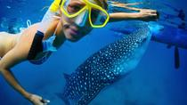Swim with a Whale Shark, Baja California Sur, Other Water Sports