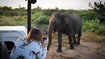Udawalawe Private Safari Tour From Galle, Galle, Private Sightseeing Tours