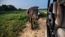 Udawalawe Private Safari Tour From Mirissa, Sri Lanka, Private Sightseeing Tours