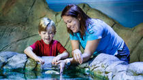 SEA LIFE Bray Entrance Ticket, Dublin, Attraction Tickets
