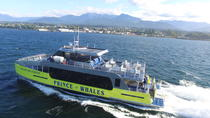 Best of Victoria Tour: Whale Watching, Butchart Gardens and Sunset Cruise back to Vancouver, ...