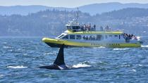 Half-Day Whale Watching Adventure from Vancouver, Vancouver, Dolphin & Whale Watching