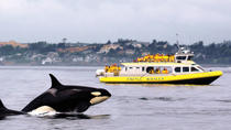 Victoria Whale Watching Adventure in a Covered Vessel, Victoria, Dolphin & Whale Watching