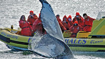 Zodiac Whale-Watching Adventure in Victoria, Victoria, Dolphin & Whale Watching