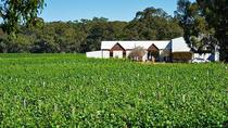 Swan Valley Winery and Vineyard Tour, Perth, Wine Tasting & Winery Tours