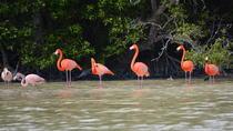 Celestun Biosphere Reserve Tour from Merida, Merida, Cultural Tours