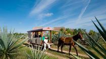 Sotuta de Peon Hacienda Cultural Tour, Merida