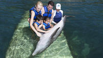 Swim with Dolphins: Dolphin Ride at Interactive Aquarium, Cancun, Attraction Tickets