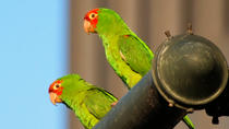 San Francisco's Wild Parrots of Telegraph Hill Walking Tour, San Francisco, Hiking & Camping