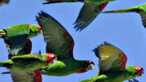 San Francisco's Wild Parrots of Telegraph Hill Walking Tour