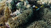 Muiron Island Dive & Snorkel Tour, Exmouth, Snorkeling
