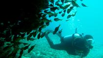 Tauchen Ningaloo Reef, Exmouth, Scuba Diving