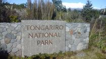 Return Shuttle to Explore Whakapapa Village from National Park, Tongariro National Park, Bus ...