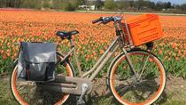 Small Group Tulip and Spring Flower Fields Bike Tour, Alkmaar, Bike & Mountain Bike Tours