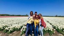 Small Group Tulip and Spring Flower Fields Bike Tour, Alkmaar, Bike & Mountain Bike Tours