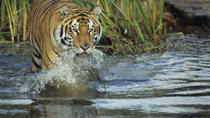 3-Night Chitwan National Park Safari from Kathmandu, Kathmandu, null