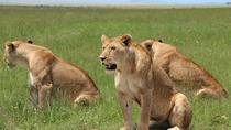3days Masai Mara private safari with a 4x4 land cruiser Jeep, Nairobi, 4WD, ATV & Off-Road Tours