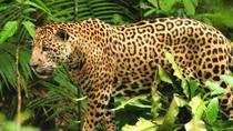 Manu Amazon Jungle 4 Days, Cusco, Multi-day Tours