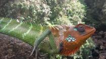 Sinharaja Rain Forest day tour, Bentota, Cultural Tours