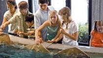 Houston City Tour and Admission to Downtown Aquarium, Houston