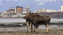 Anchorage Shore Excursion: Pre-Cruise Transfer and Tour from Anchorage to Whittier, Anchorage, Ski ...
