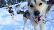 Full-Day Willow Dog Sledding, Anchorage, Port Transfers