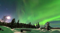 Northern Lights Overnight Tour with Dog Sledding, Anchorage