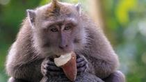 Best of Ubud: Monkey Forest, Temple, Rice Terrace, Waterfall and Coffee Tour, Bali, Coffee & Tea ...