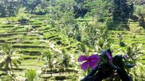 Ubud Special Guided Tour, Ubud, Cultural Tours