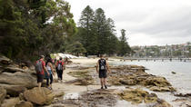 Manly Guided Hike to Help Kids, Sydney, Dolphin & Whale Watching