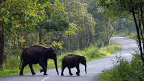 8Night - Malabar Escape (Kerala) - Premium Honeymoon, Kochi, Honeymoon Packages