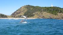 Kayaking with Dolphins in Byron Bay