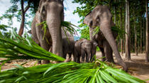 Chiang Mai Adventure: Elephant Camp, Zipline, Whitewater Rafting and Long-Neck Hill Tribe, Chiang ...