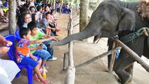 Elephant Conservation Experience in Chiang Mai, Chiang Mai, Viator Exclusive Tours