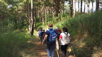 Opium Trail Trek Including Wat Phra That Doi Suthep and Hmong Village Tour, Chiang Mai, Private Day ...