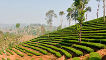 Private Tour: Hill Tribe Villages and Tea Plantation from Chiang Rai