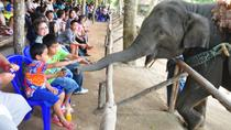 Viator Exclusive: Elephant Conservation Experience in Chiang Mai, チェンマイ
