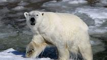 Guided Ranua Wildlife Park tour, Small group adventure, Lunch included, Rovaniemi, 4WD, ATV &...