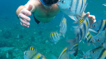 Snorkeling day at Cozumel from Cancun and Pto Morelos by Glass Bottom Boat, Cancun, Glass Bottom ...