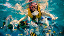 Snorkeling day at Cozumel from Tulum Akumal & Pto Avent by Glass Bottom Boat, Tulum, Glass Bottom ...