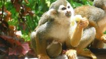 Monkey Land Explorer and Zip Line Adventure from Punta Cana, Punta Cana, Ziplines