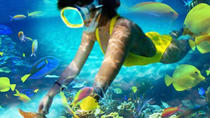 Reef Explorer from Punta Cana, Punta Cana, Half-day Tours