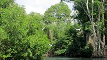 The Original Mangrove and Beach Experience from Punta Cana, Punta Cana, Day Trips