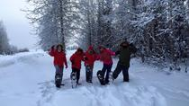 Snowshoe Tour at Chena Lakes, Fairbanks, Nature & Wildlife