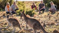 8-Day Tasman Wildlife and Wilderness Encounter Including Accommodation, Hobart, Cultural Tours