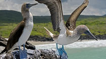 The Best of Galapagos Adventure in 7 Days, Galapagos Islands, Multi-day Tours
