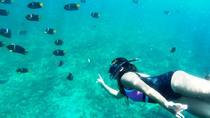 A GREAT LOS ARCOS SNORKELING EXPERIENCE, Puerto Vallarta, Day Cruises