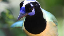 BIRD WATCHING ECOTOURS, Puerto Vallarta, Nature & Wildlife