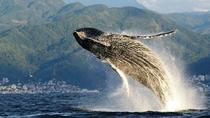 WHALE WATCHING ECOTOURS, Puerto Vallarta, Day Cruises